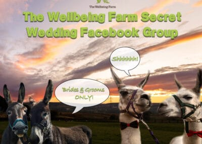 weddings-at-the-wellbeing-farm00043