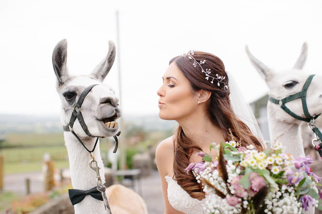 bride-kissing-llama-at-wedding