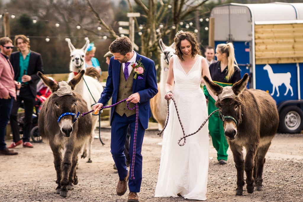 wedding-with-donkeys