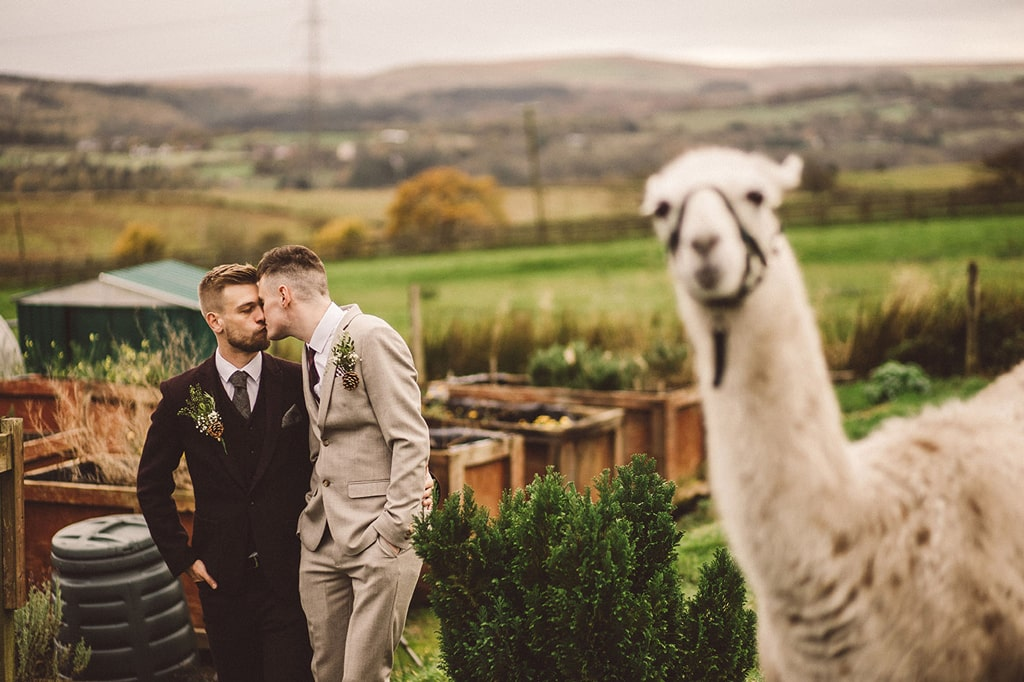 Gay Couple with Llama