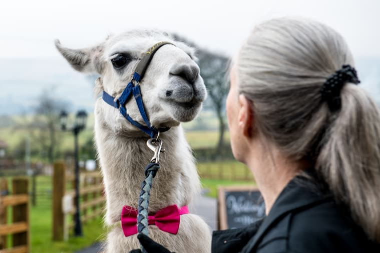 Corporate-event-book-wellbeing-farm00013