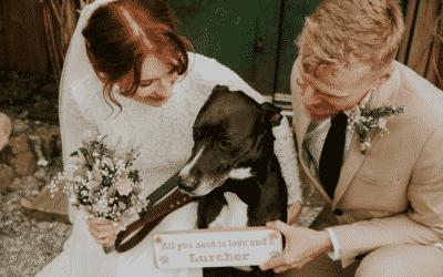 Summer wedding story: Hayley and Declan